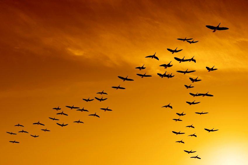 Aprenda a migrar seu site em WordPress